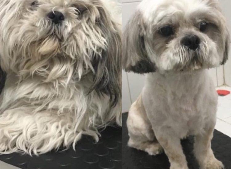 peluqueria animal gatos y perros
