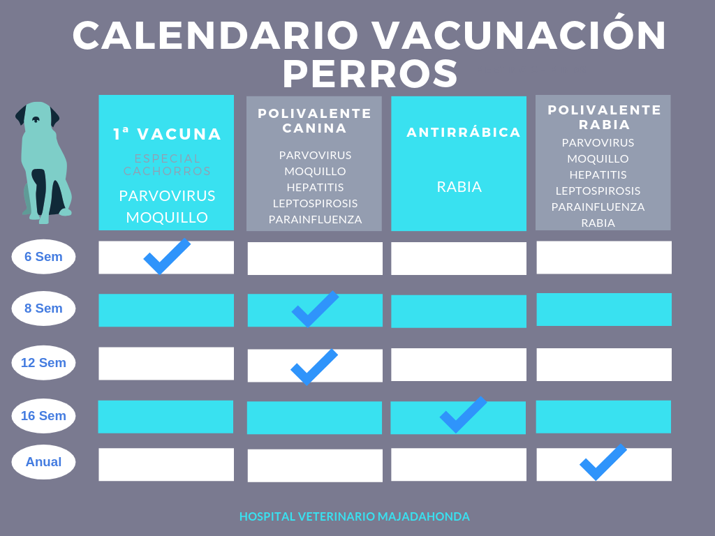 Calendario Perruno.Vacunas Para Perros Obligatorias Cuales Son Y Su Calendario